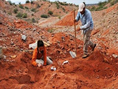 العثور على متحجرات لديناصور عملاق في الأرجنتين