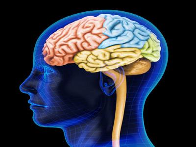 الوظائف الدماغية